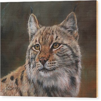 Eurasian Lynx Wood Print by David Stribbling