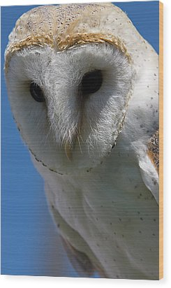 Wood Print featuring the photograph European Barn Owl by JT Lewis