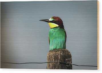 Wood Print featuring the photograph European Bee Eater by Wolfgang Vogt