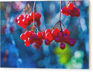 Wood Print featuring the photograph European Cranberry Berries by Alexander Senin