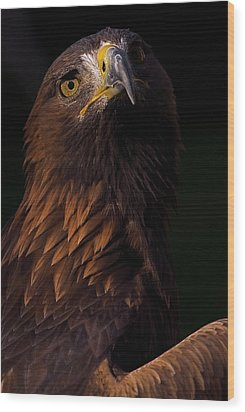 Wood Print featuring the photograph European Golden Eagle by JT Lewis