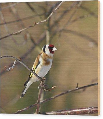 European Goldfinch 2 Wood Print by Jouko Lehto