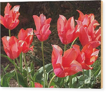 Even More Temple Beauty Tulips Wood Print