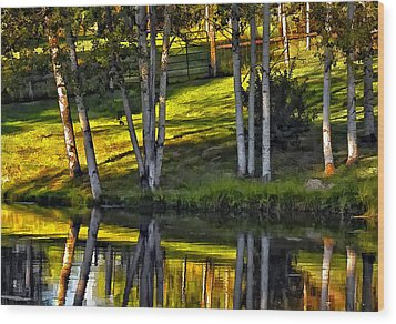 Evening Birches Wood Print by Steve Harrington