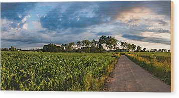 Wood Print featuring the photograph Evening In A Cornfield by Dmytro Korol