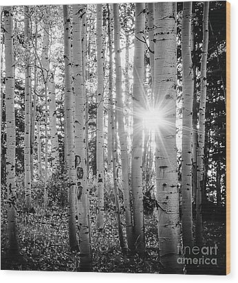 Wood Print featuring the photograph Evening In An Aspen Woods Bw by The Forests Edge Photography - Diane Sandoval