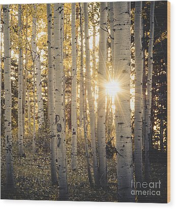 Evening In An Aspen Woods Wood Print by The Forests Edge Photography - Diane Sandoval