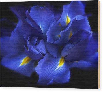 Evening Iris Wood Print by Jessica Jenney
