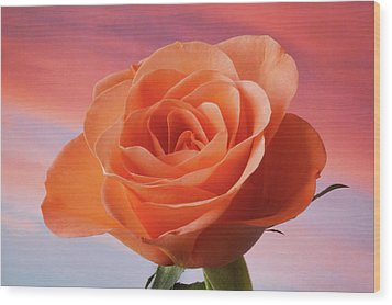 Wood Print featuring the photograph Evening Rose by Terence Davis