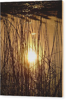 Evening Sunset Over Water Wood Print