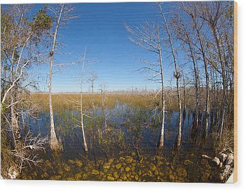 Everglades 85 Wood Print by Michael Fryd