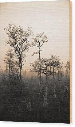 Everglades Cypress Stand Wood Print by Gary Dean Mercer Clark