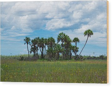 Everglades Landscape Wood Print by Christopher L Thomley