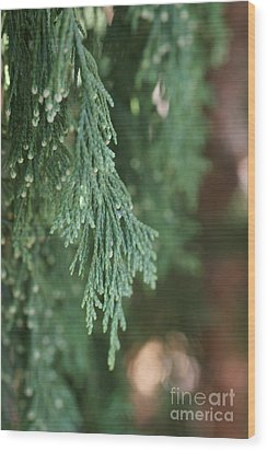 Evergreen Wood Print
