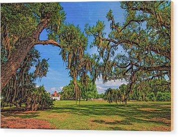 Evergreen Plantation Wood Print by Steve Harrington