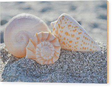 Wood Print featuring the photograph Every Shell Has A Story by Melanie Moraga