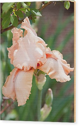 Wood Print featuring the photograph Everything Is Peachy by Sherry Hallemeier