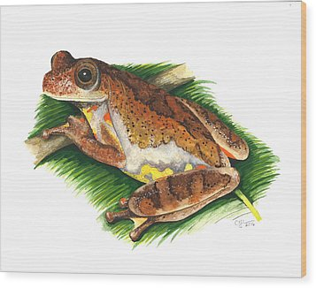 Executioner Treefrog Wood Print by Cindy Hitchcock