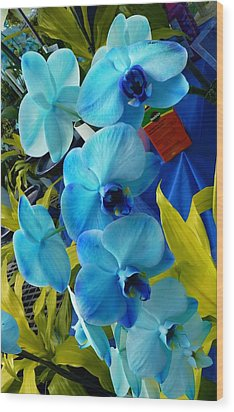 Exotic Blue Orchids Wood Print by Jeanette Oberholtzer