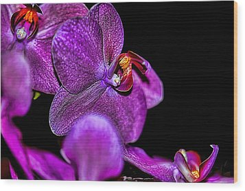 Wood Print featuring the photograph Exotic by Diana Mary Sharpton