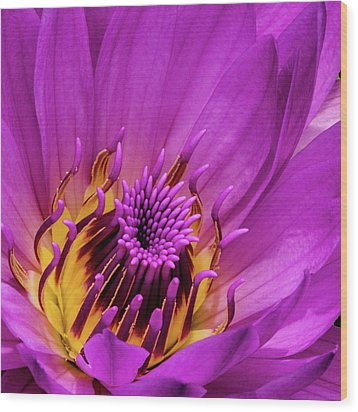 Wood Print featuring the photograph Exotic Hot Pink Water Lily Macro by Julie Palencia
