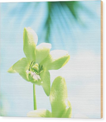 Exotic Orchid Beauty Wood Print by Georgia Fowler