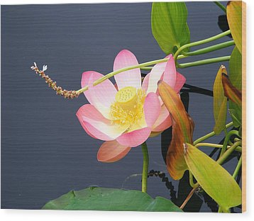 Wood Print featuring the photograph Exotic Waterlily by Margie Avellino
