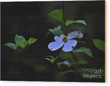 Wood Print featuring the photograph Exquisite Light by Skip Willits