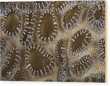 Extreme Close-up Of A Crust Anemone Wood Print by Terry Moore