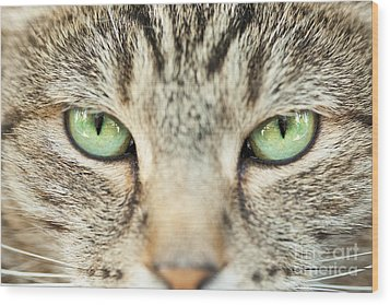 Extreme Close Up Tabby Cat Wood Print by Sharon Dominick