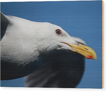 Eye Of A Seagull Wood Print by Sumoflam Photography