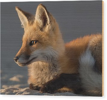 Wood Print featuring the photograph Eye Of The Fox by Bill Wakeley