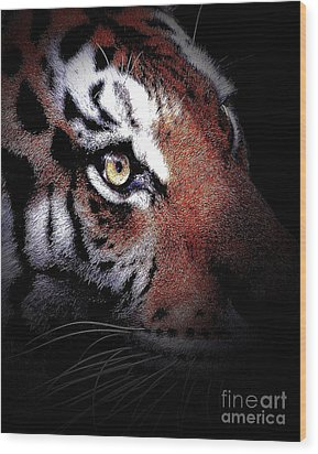 Eye Of The Tiger 2 Wood Print by Animals Art