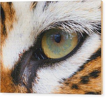Eye Of The Tiger Wood Print by Helen Stapleton