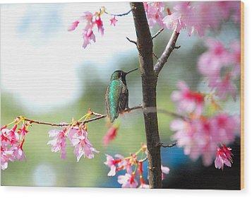 Eye On Spring Wood Print by Lynn Bauer