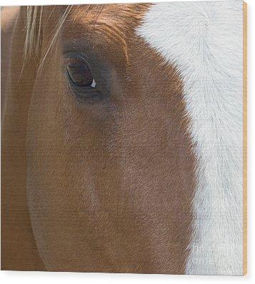 Eye On You Horse Wood Print