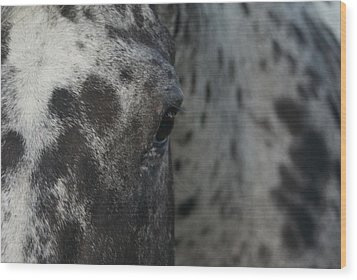 Wood Print featuring the photograph Eye See Spots by Lynda Dawson-Youngclaus