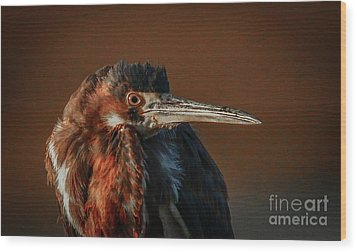 Eye To Eye With Heron Wood Print