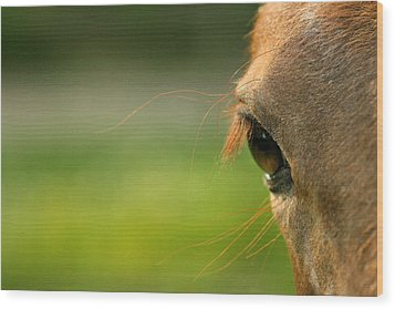 Wood Print featuring the photograph Eye Whiskers by Angela Rath