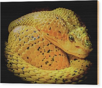 Wood Print featuring the photograph Eyelash Viper by Karen Wiles