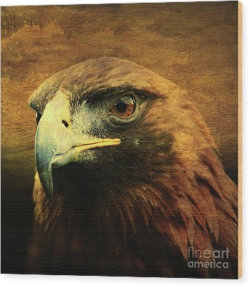 Eyes Of The Golden Hawk . Square Wood Print by Wingsdomain Art and Photography