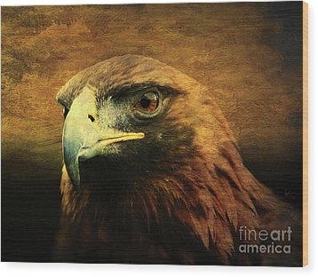 Eyes Of The Golden Hawk Wood Print by Wingsdomain Art and Photography