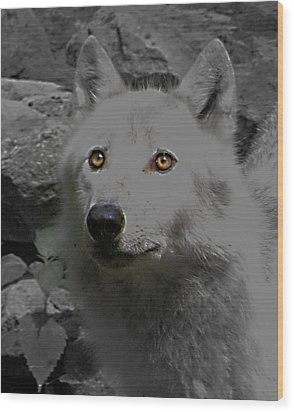 Wood Print featuring the photograph Eyes Of The Wolf by Debra     Vatalaro