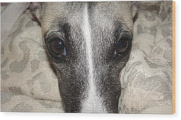 Eyes Whippet Wood Print by Marie-france Quesnel