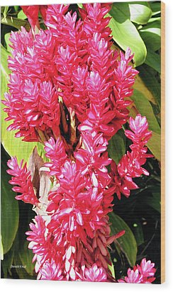F10 Red Ginger Wood Print by Donald k Hall
