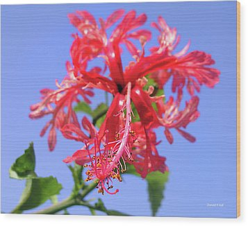 F18 Hawaiian Hibiscus Wood Print by Donald k Hall