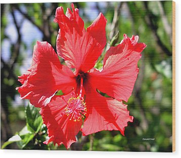 F20 Red Hibiscus Wood Print by Donald k Hall
