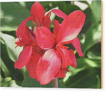 F22 Cannas Flower Wood Print by Donald k Hall