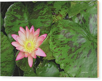 F6 Water Lily Wood Print by Donald k Hall