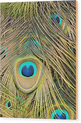 Wood Print featuring the photograph Fabulous Feathers by Margaret Bobb